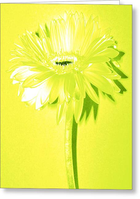 Sunburst Floral Still Life Greeting Cards - Margarita Zinnia Greeting Card by Sherry Allen