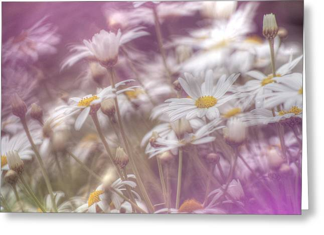 Margarite Field Greeting Card by Heiko Koehrer-Wagner