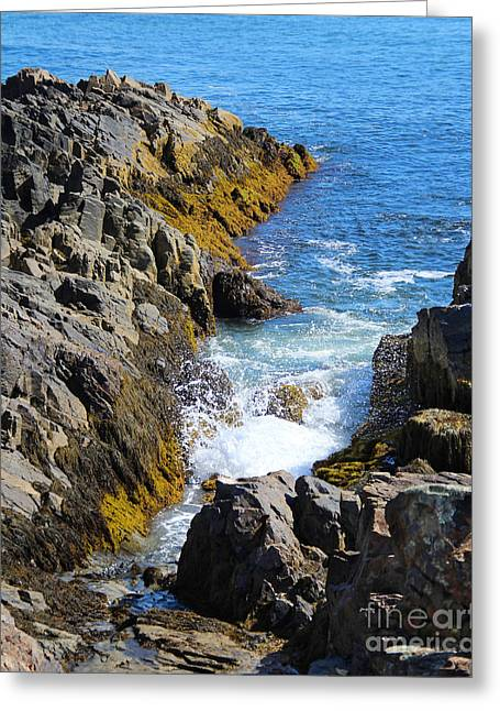 Marginal Way Crevice Greeting Card by Jemmy Archer