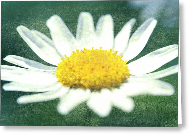 Bloosom Greeting Cards - Marguerite Blossom Greeting Card by Freefree Art