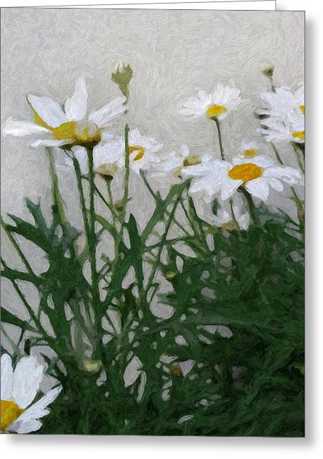 Marguerite Flowers Greeting Cards - Marguerites Greeting Card by Lutz Baar