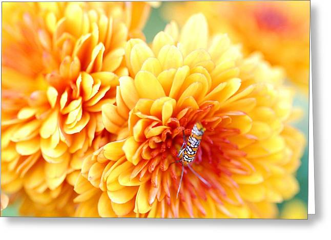 Cocoon Greeting Cards - Ailanthus Webworm visits the Marigold  Greeting Card by Optical Playground By MP Ray