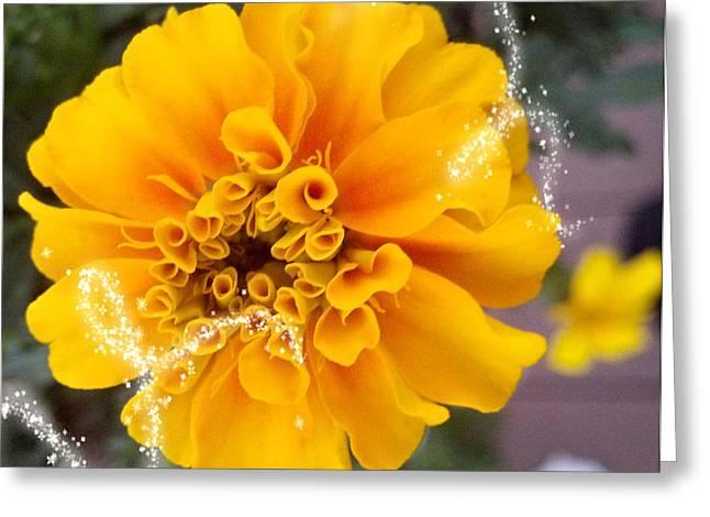 Cellphone Digital Art Greeting Cards - Marigold Greeting Card by Susan Kinney