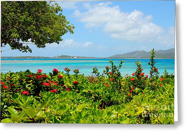 British Virgin Islands Greeting Cards - Marina Cay Dock Greeting Card by Carey Chen