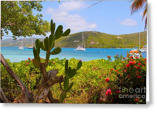 British Virgin Islands Greeting Cards - Marina Cay view Greeting Card by Carey Chen