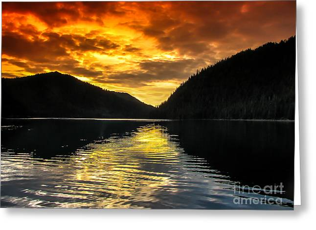 Southeast Alaska Greeting Cards - Marine Beauty Greeting Card by Robert Bales