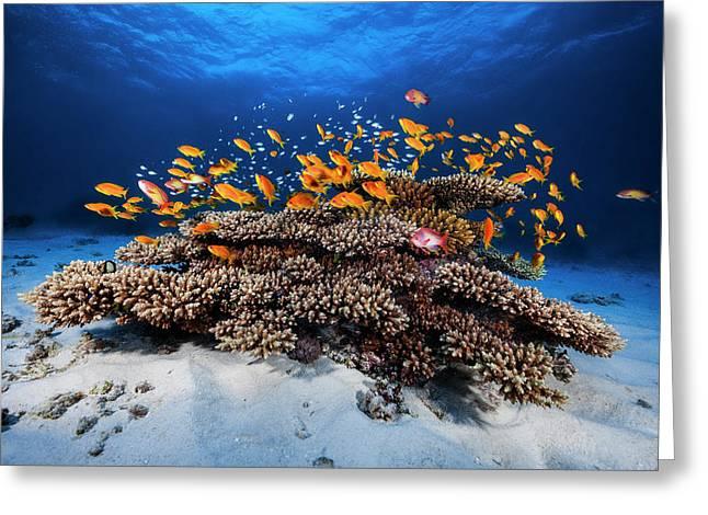 Marine Life Greeting Card by Barathieu Gabriel