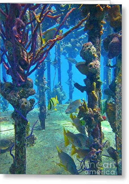 Water Grouper Print Greeting Cards - Marine Life on a Wreak Greeting Card by John Malone