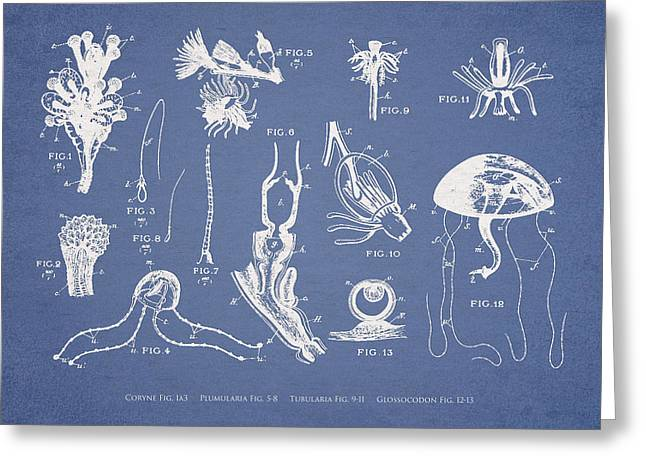 Jelly Fish Digital Art Greeting Cards - Marine Organisms Hydromedusae Greeting Card by Aged Pixel