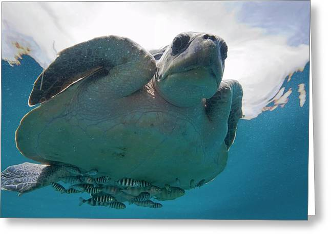 Marine Turtle And Fish Greeting Card by Christopher Swann