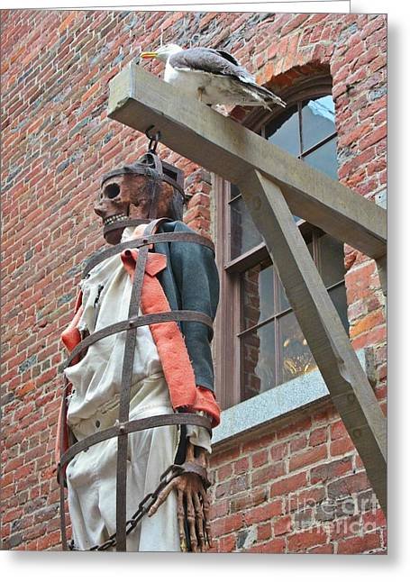 Halifax Photographs Greeting Cards - Maritime Pirate Greeting Card by John Malone