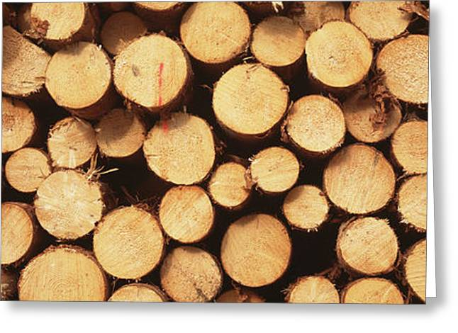 Lumber Greeting Cards - Marked Wood In A Timber Industry, Black Greeting Card by Panoramic Images