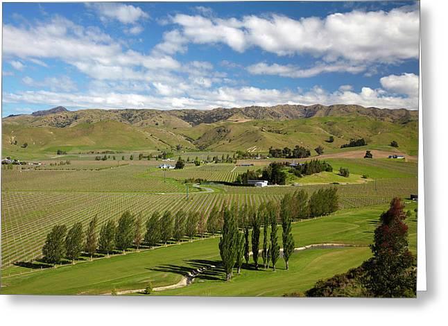 Marlborough Golf Club, Vineyard Greeting Card by David Wall