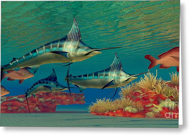 Sea Creature Pictures Greeting Cards - Marlin Reef Greeting Card by Corey Ford