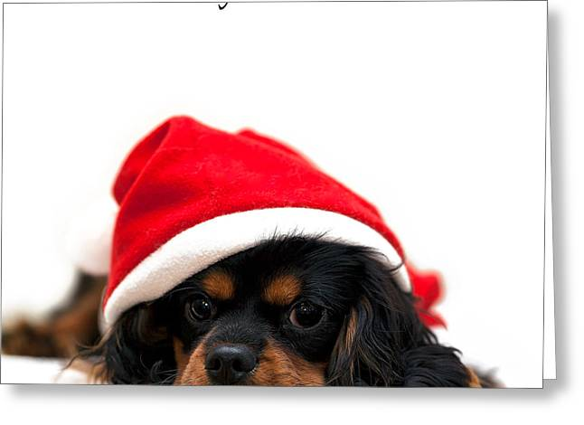 Best Sellers -  - Puppies Photographs Greeting Cards - Marmaduke isolated Greeting Card by Jane Rix