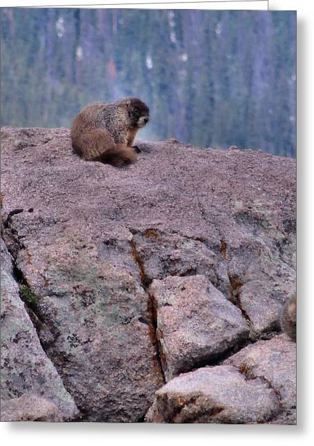 Wildlife Photograph Greeting Cards - Marmot Love Greeting Card by Dan Sproul