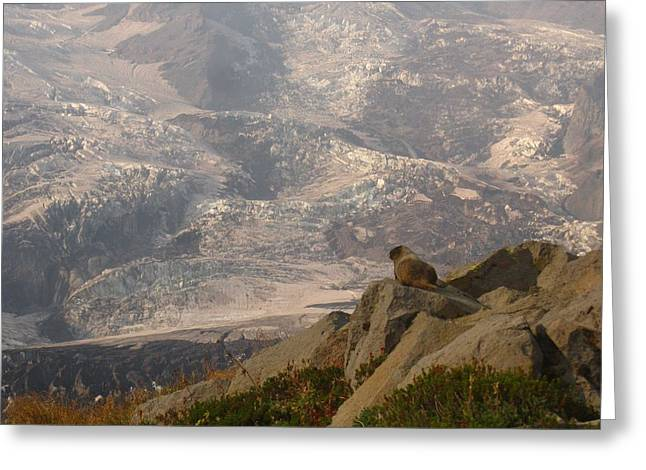 Marmot Mountainside Greeting Card by Michael French