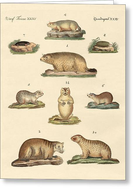 Groundhog Drawings Greeting Cards - Marmots and moles Greeting Card by Splendid Art Prints