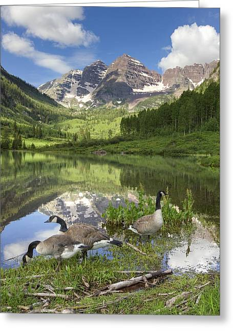 Colorado Prints Greeting Cards - Maroon Bells Images - Canada Geese on a Summer Morning in Colora Greeting Card by Rob Greebon