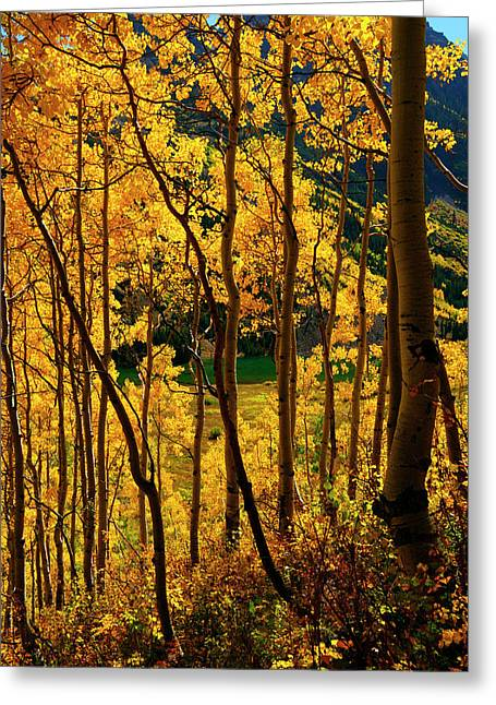 Pk Greeting Cards - Maroon Lake Gold Greeting Card by Jeremy Rhoades