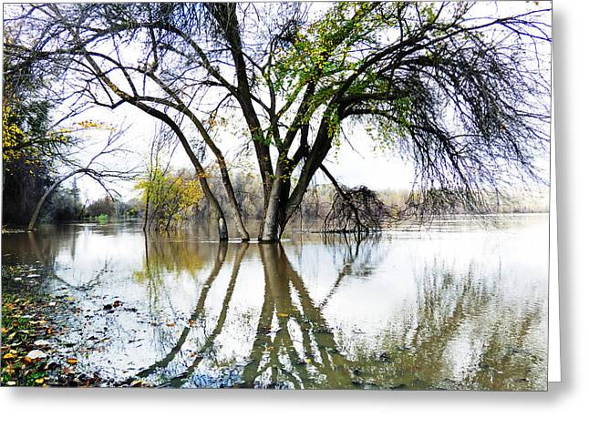 Colusa Greeting Cards - Marooned Greeting Card by Pamela Patch