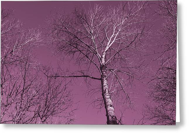 Winter Trees Mixed Media Greeting Cards - Mauve Trees Greeting Card by Bonnie Bruno