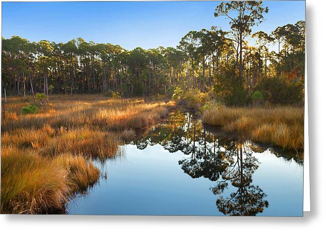 Marsh And Trees At Sunrise St Joseph Greeting Card by Tim Fitzharris