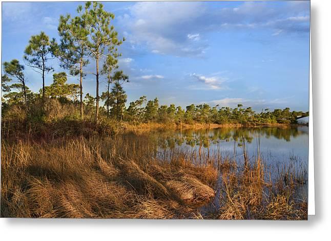 Marsh And Trees Saint George Isl Florida Greeting Card by Tim Fitzharris