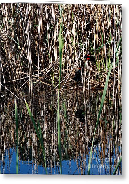 Photos Of Birds Greeting Cards - Marsh Dwellers Greeting Card by Skip Willits