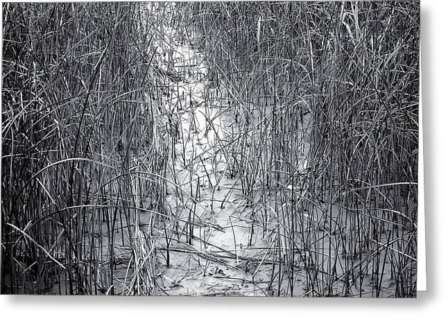 Marsh Path Greeting Cards - Marsh Grass Path Greeting Card by Geoffrey Baker