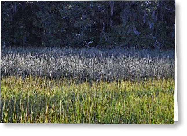 Beach Photograph Greeting Cards - Marsh Grasses and Moss-Covered Trees on Jekyll Island 1.1 Greeting Card by Bruce Gourley