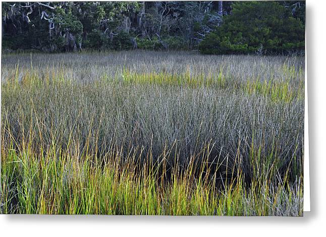 Beach Photograph Greeting Cards - Marsh Grasses and Moss-Covered Trees on Jekyll Island 1.2 Greeting Card by Bruce Gourley