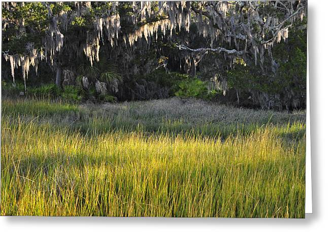 Beach Photograph Greeting Cards - Marsh Grasses and Moss-Covered Trees on Jekyll Island 1.3 Greeting Card by Bruce Gourley