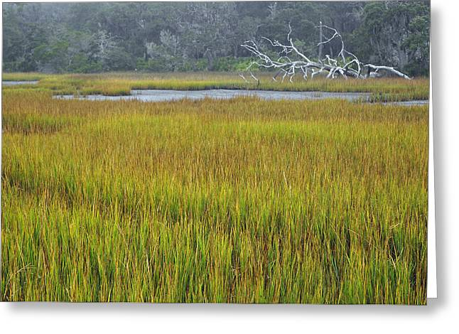 Beach Photographs Greeting Cards - Marsh Grasses and Moss-Covered Trees on Jekyll Island 1.4 Greeting Card by Bruce Gourley