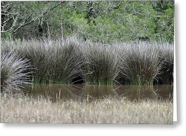 Beach Photographs Greeting Cards - Marsh Grasses and Moss-Covered Trees on Jekyll Island 1.5 Greeting Card by Bruce Gourley
