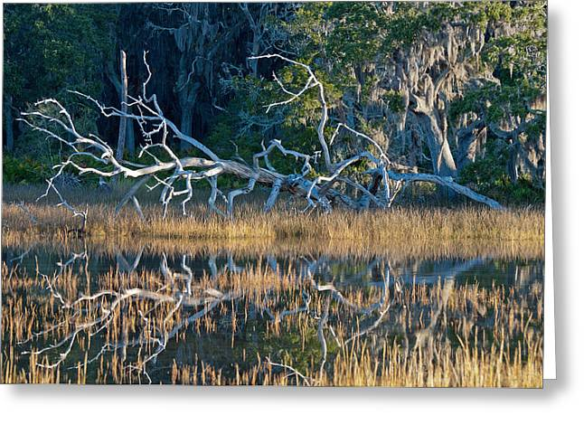 Beach Photograph Greeting Cards - Marsh Grasses and Moss-Covered Trees on Jekyll Island 1.6 Greeting Card by Bruce Gourley