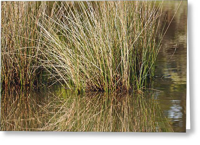 Beach Photographs Greeting Cards - Marsh Grasses Reflected in Water at High Tide Greeting Card by Bruce Gourley