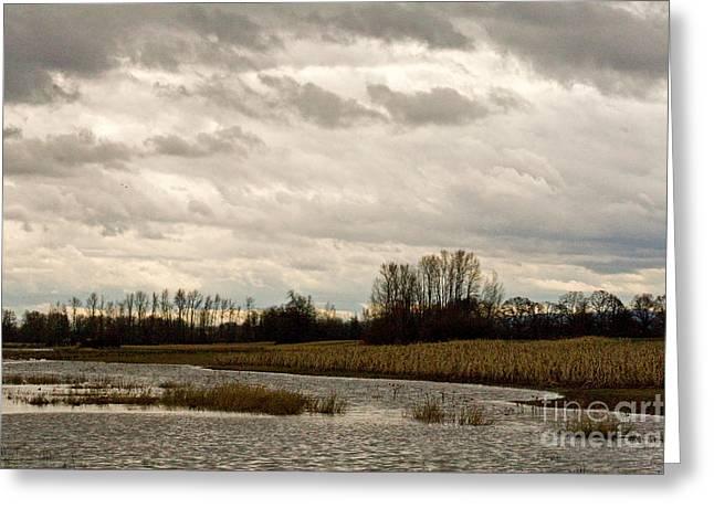 Sauvie Island Greeting Cards - Marsh Landscape, Oregon Greeting Card by Tim Holt