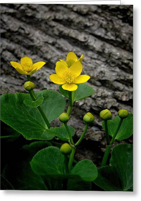 Virgin Mary Greeting Cards - Marsh Marigold Wildflower Greeting Card by Henry Kowalski