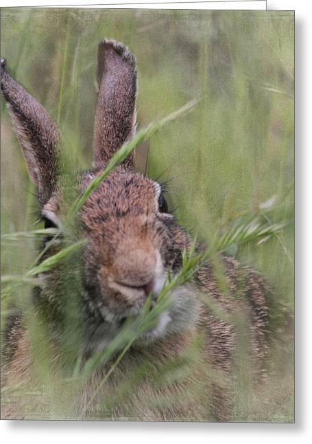 Wildlife Refuge. Greeting Cards - Marsh Rabbit Greeting Card by Angie Vogel