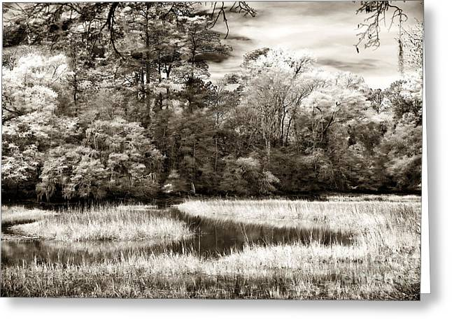 Brown Tones Greeting Cards - Marshes Greeting Card by John Rizzuto