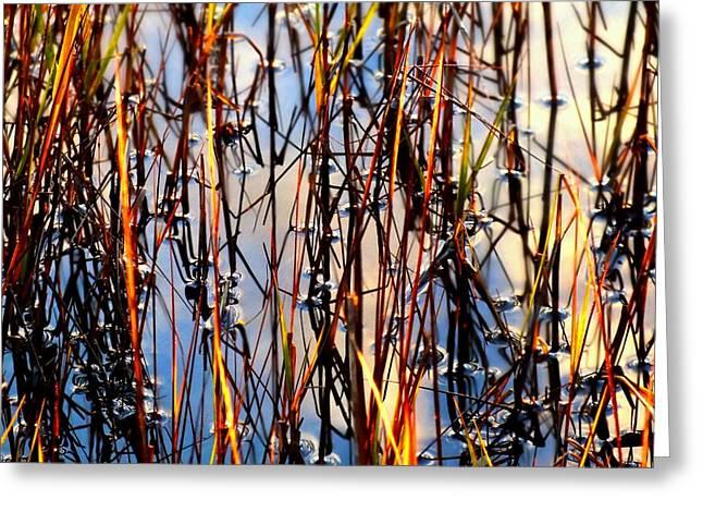 Award Greeting Cards - Marshgrass Greeting Card by Karen Wiles