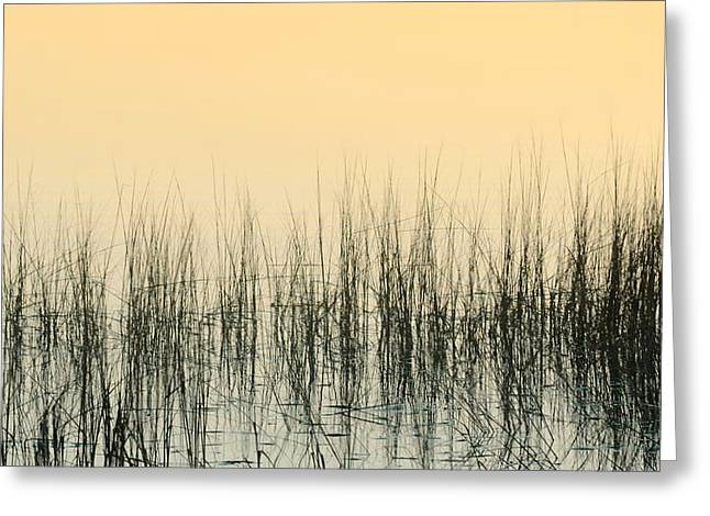 Sea Plants Greeting Cards - Marshlands Greeting Card by Diana Angstadt
