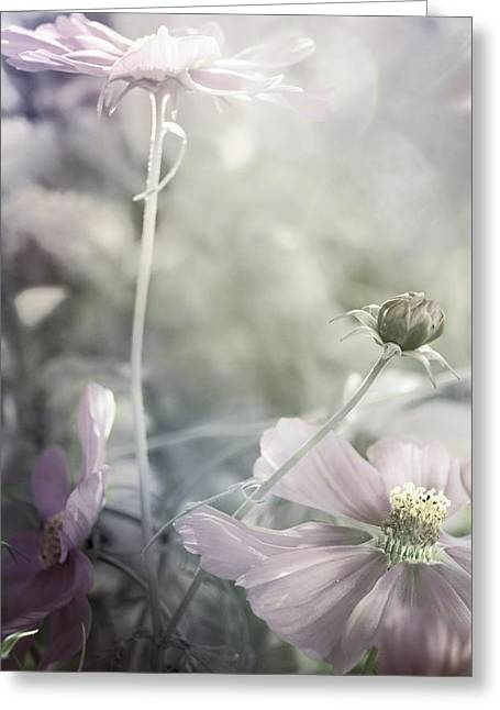 Cool Tones Greeting Cards - Marshmallow Dream Greeting Card by Darlene Kwiatkowski