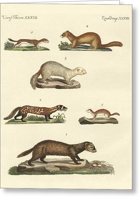 Ferret Greeting Cards - Martens and weasel Greeting Card by Splendid Art Prints