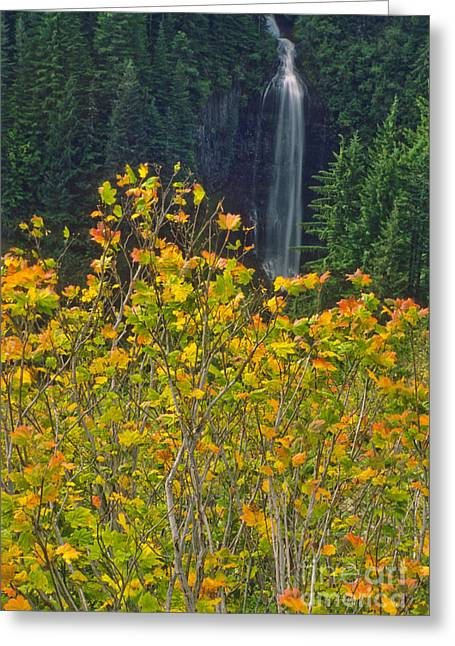 North American Vine Greeting Cards - Martha Falls With Vine Maple Greeting Card by Richard and Ellen Thane
