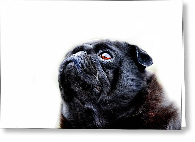 Small Dogs Greeting Cards - Martha Greeting Card by Mark Rogan