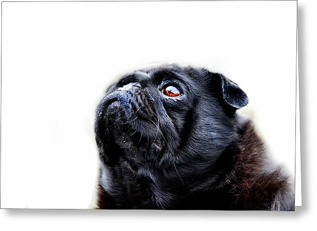 Dog Photographs Greeting Cards - Martha Greeting Card by Mark Rogan