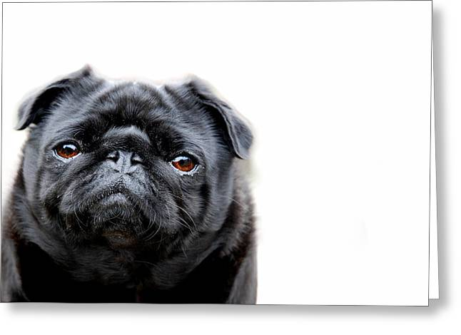 Dog Photographs Greeting Cards - Martha Pug Greeting Card by Mark Rogan