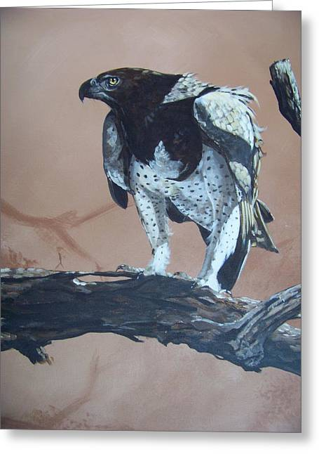 Martial Eagle Greeting Cards - Martial Eagle Greeting Card by Robert Teeling